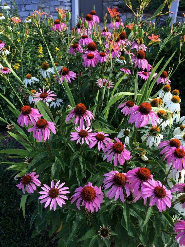 Antietam Flowers at the Visitors Center